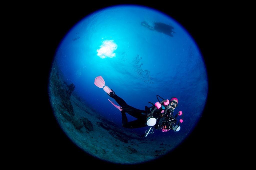 Actividades de fotografía submarina en centro de buceo en Tenerife Sur Las Galletas y La Gomera