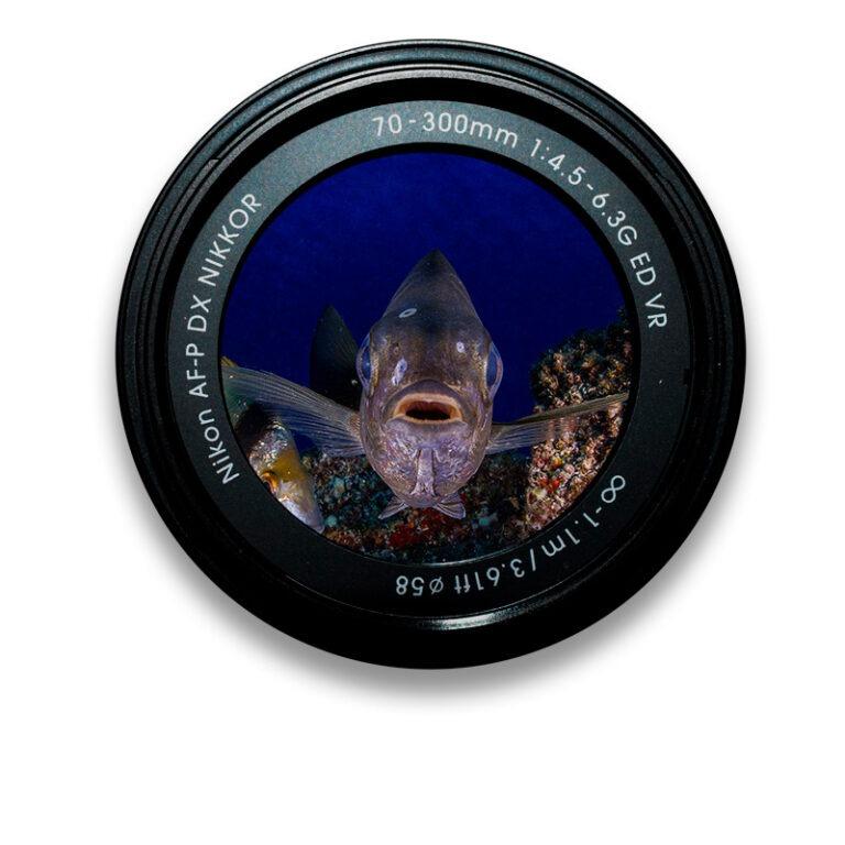Galería de fotografía submarina en Tenerife Sur