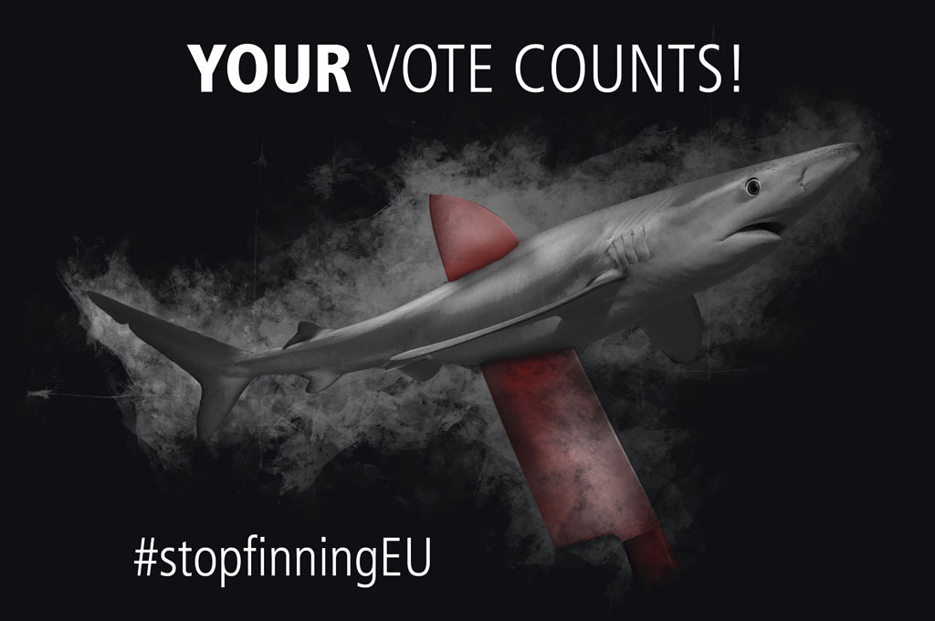 Iniciativa de conservacion - Stop finning -Los ciudadanos europeos lanzan una iniciativa para prohibir el comercio de aletas de tiburón en Europa